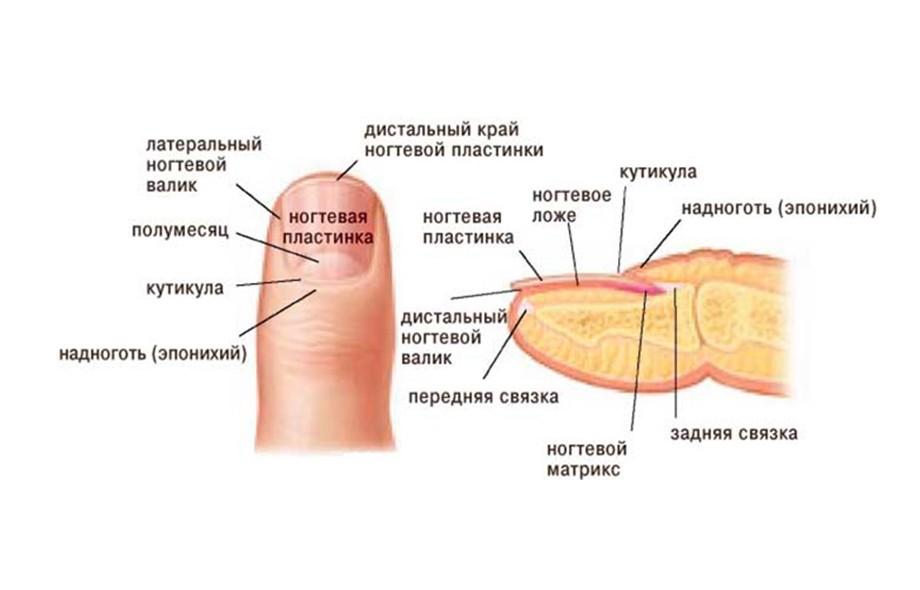 Как определить онихолизис